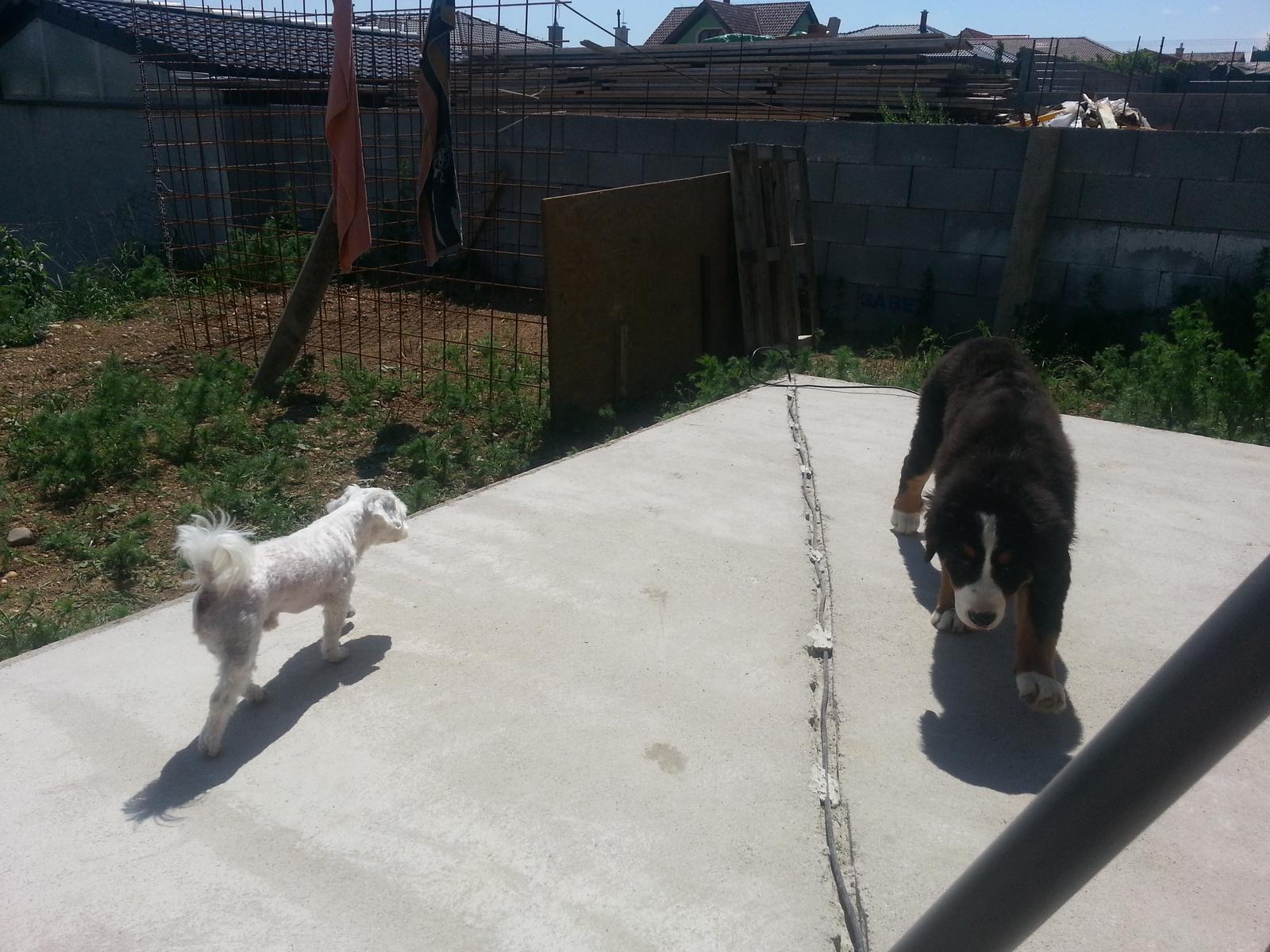 Nas zverinec - dve fenky,jeden pes a dvaja kocurikovia - Obrázok č. 10