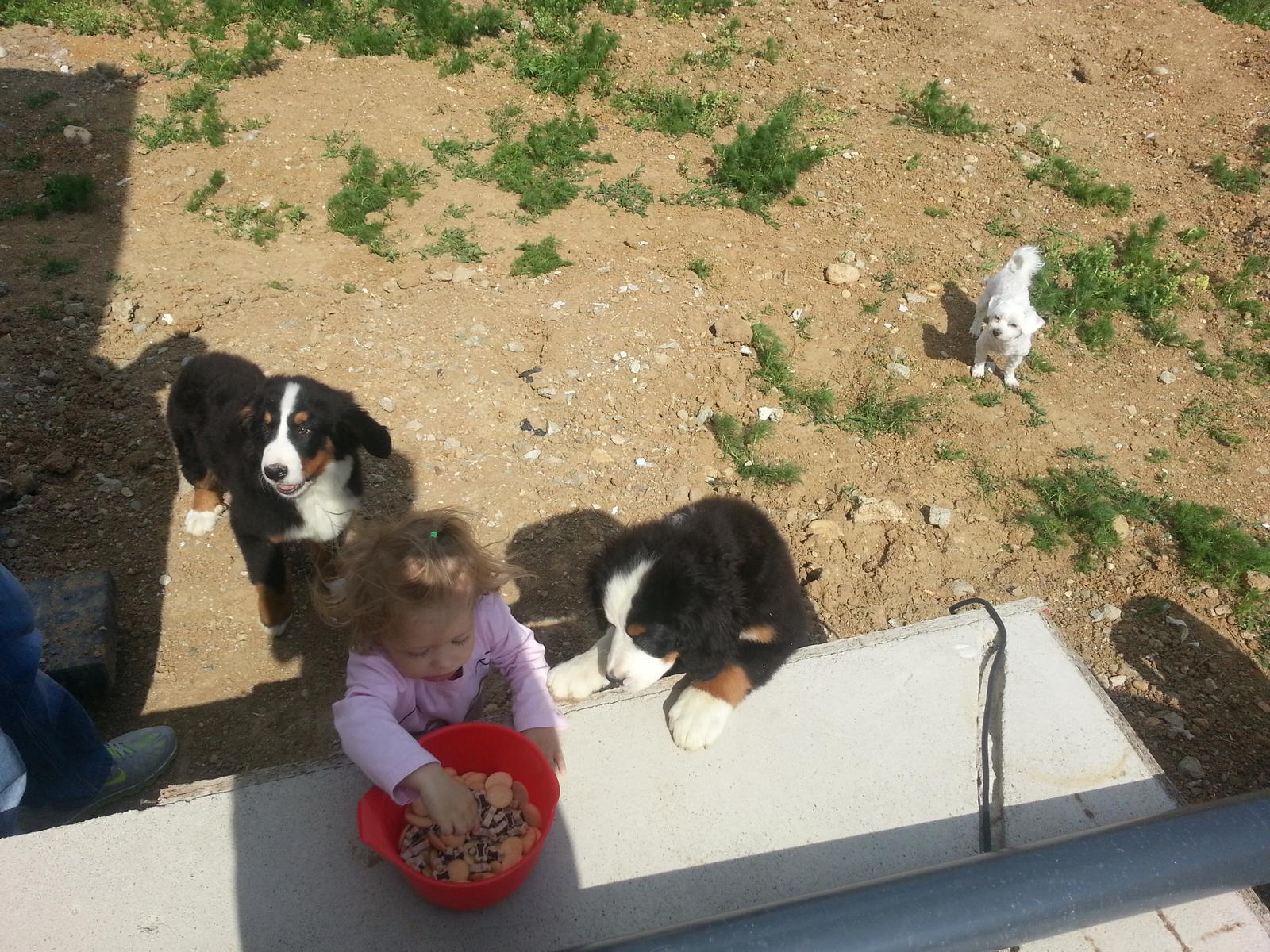 Nas zverinec - dve fenky,jeden pes a dvaja kocurikovia - Obrázok č. 11