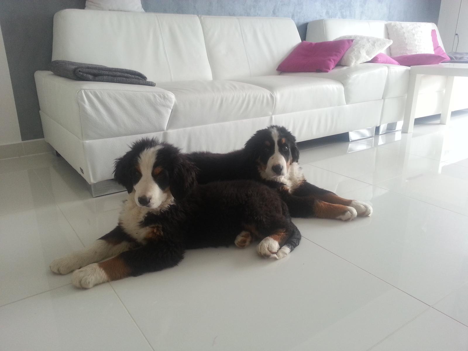 Nas zverinec - dve fenky,jeden pes a dvaja kocurikovia - Obrázok č. 14