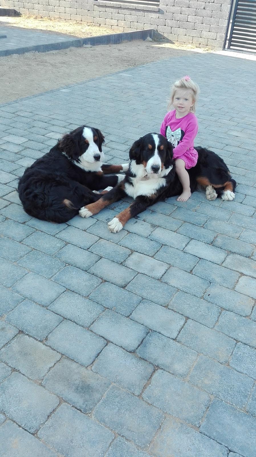 Nas zverinec - dve fenky,jeden pes a dvaja kocurikovia - takto krasne rastieme do krasy :-)