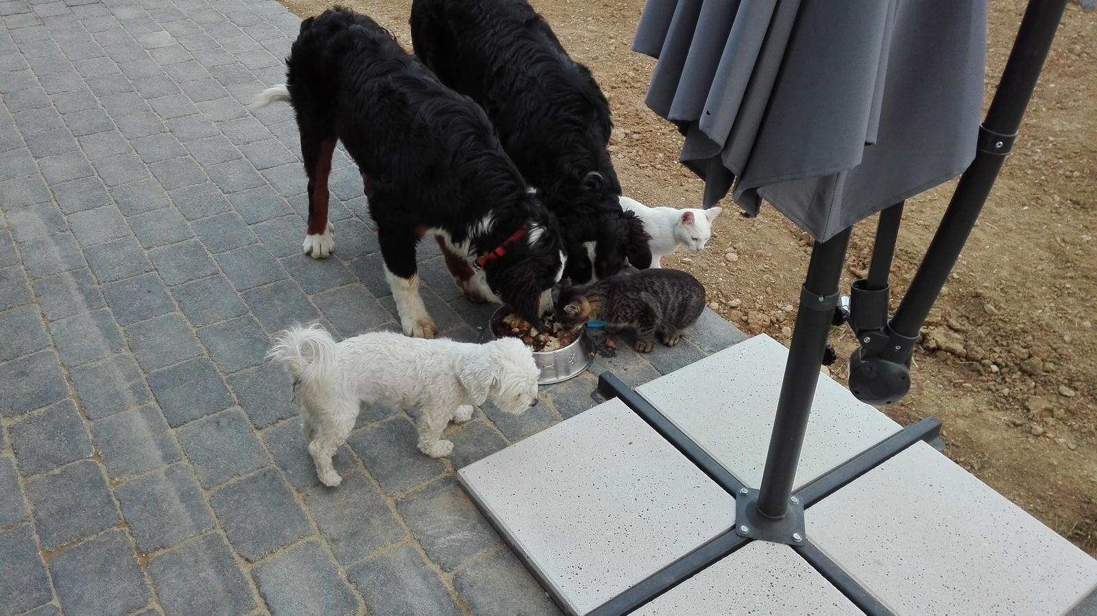 Nas zverinec - dve fenky,jeden pes a dvaja kocurikovia - ked sme hladny vsetci piati....