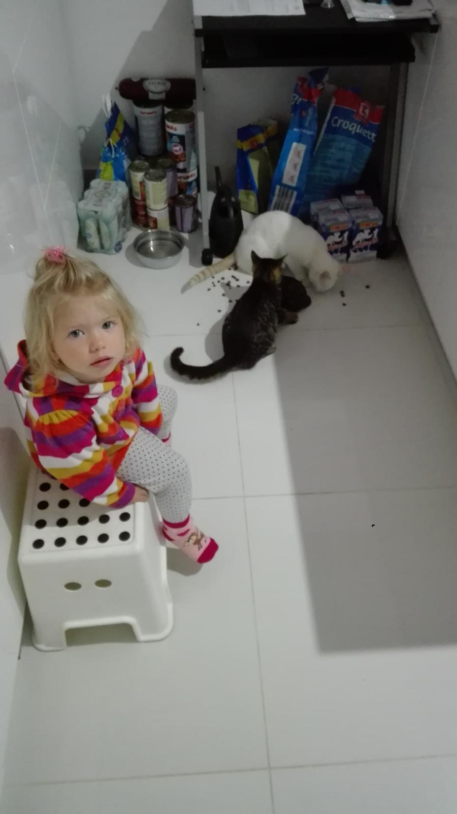 Nas zverinec - dve fenky,jeden pes a dvaja kocurikovia - krmime kocurikov - stale su hladni :-)