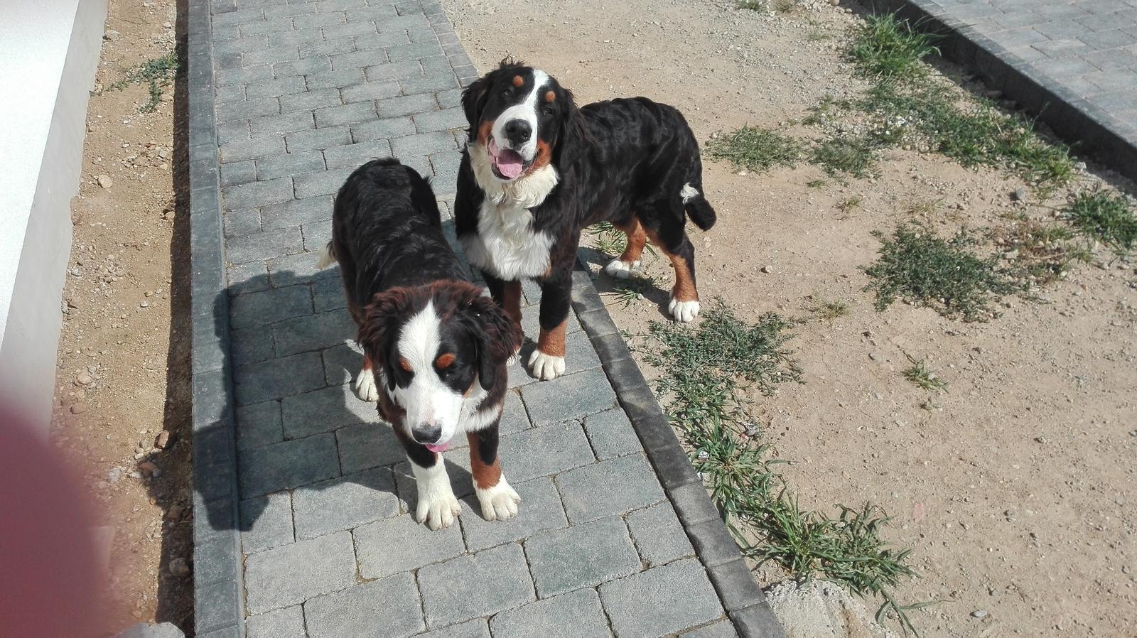 Nas zverinec - dve fenky,jeden pes a dvaja kocurikovia - nase zlaticka