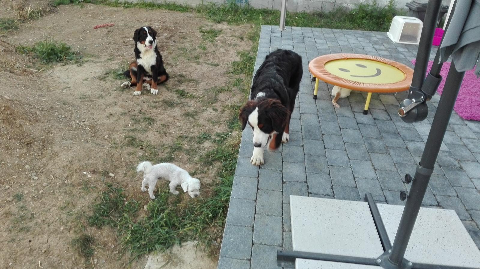 Nas zverinec - dve fenky,jeden pes a dvaja kocurikovia - trojka -dve fenky a psik