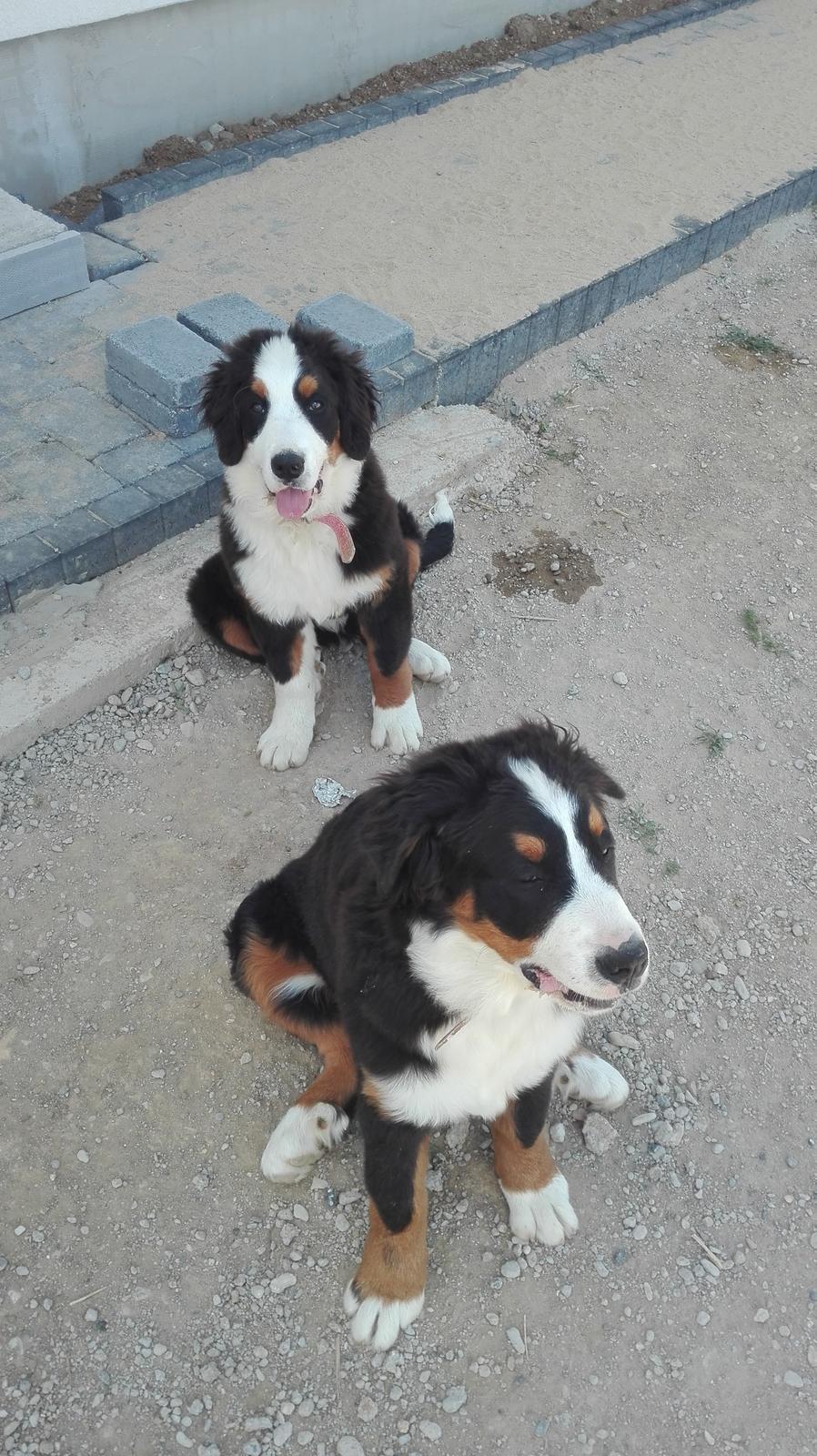 Nas zverinec - dve fenky,jeden pes a dvaja kocurikovia - Obrázok č. 22