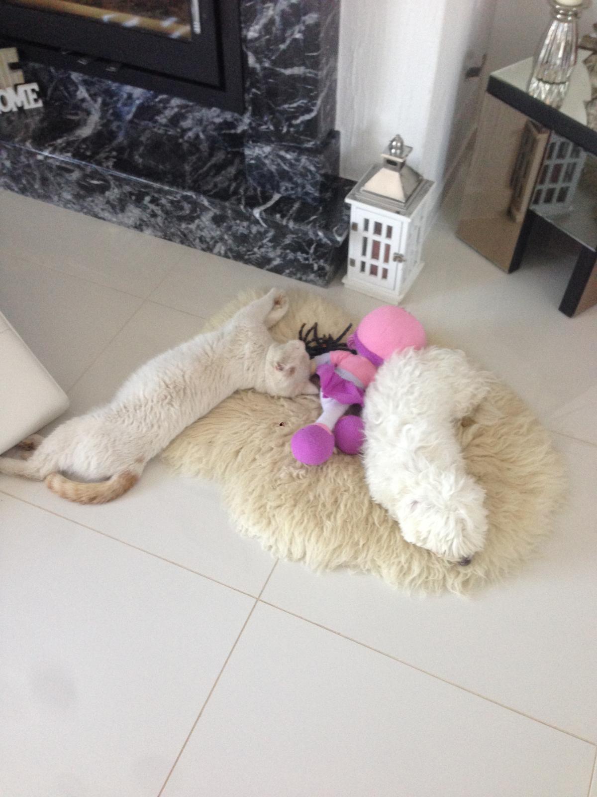Nas zverinec - dve fenky,jeden pes a dvaja kocurikovia - Takto pekne spolu oddychuju - psik a kocurik