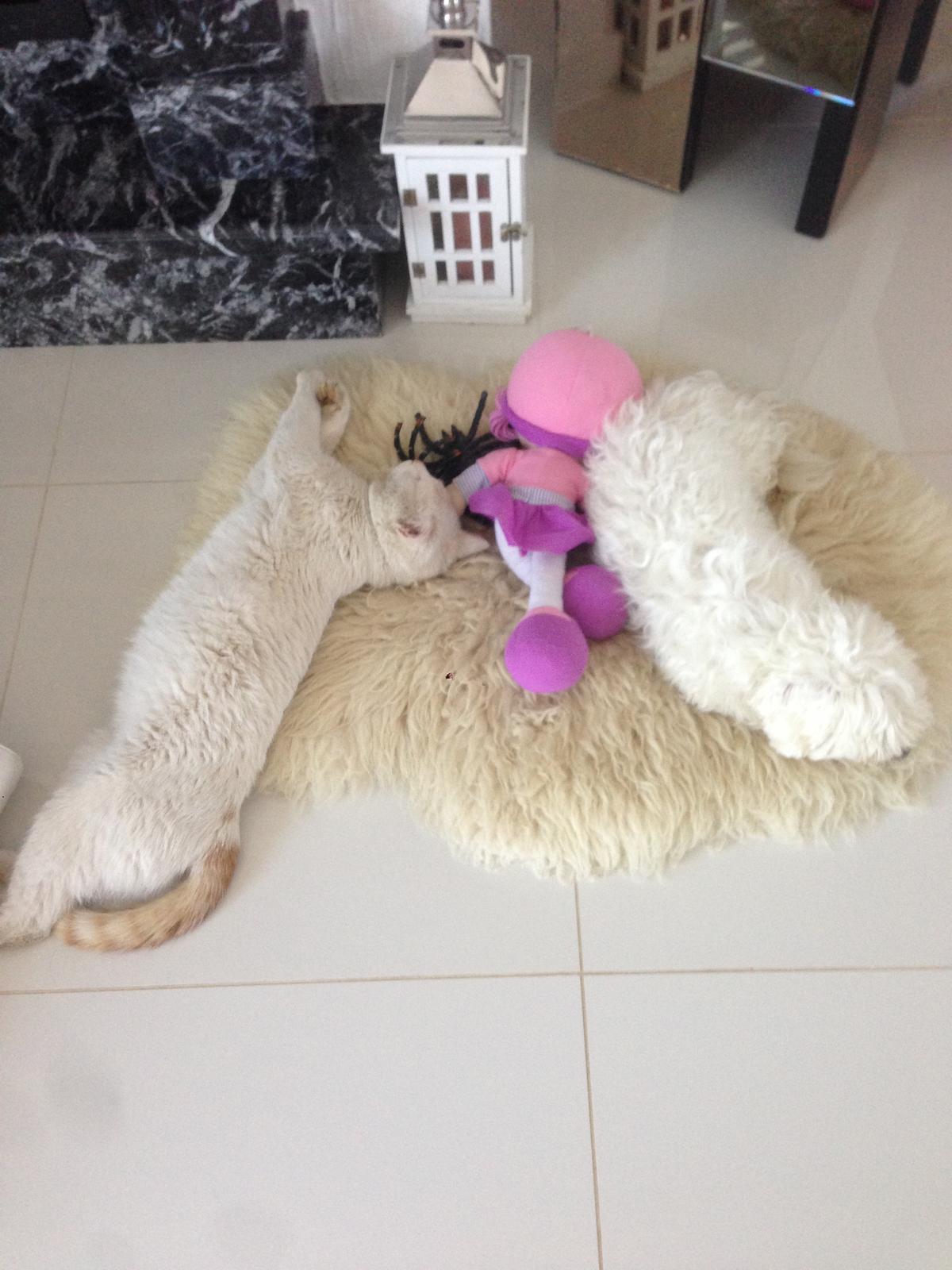Nas zverinec - dve fenky,jeden pes a dvaja kocurikovia - dcerka im tam prilozila babiku aby im nebolo smutno :-)