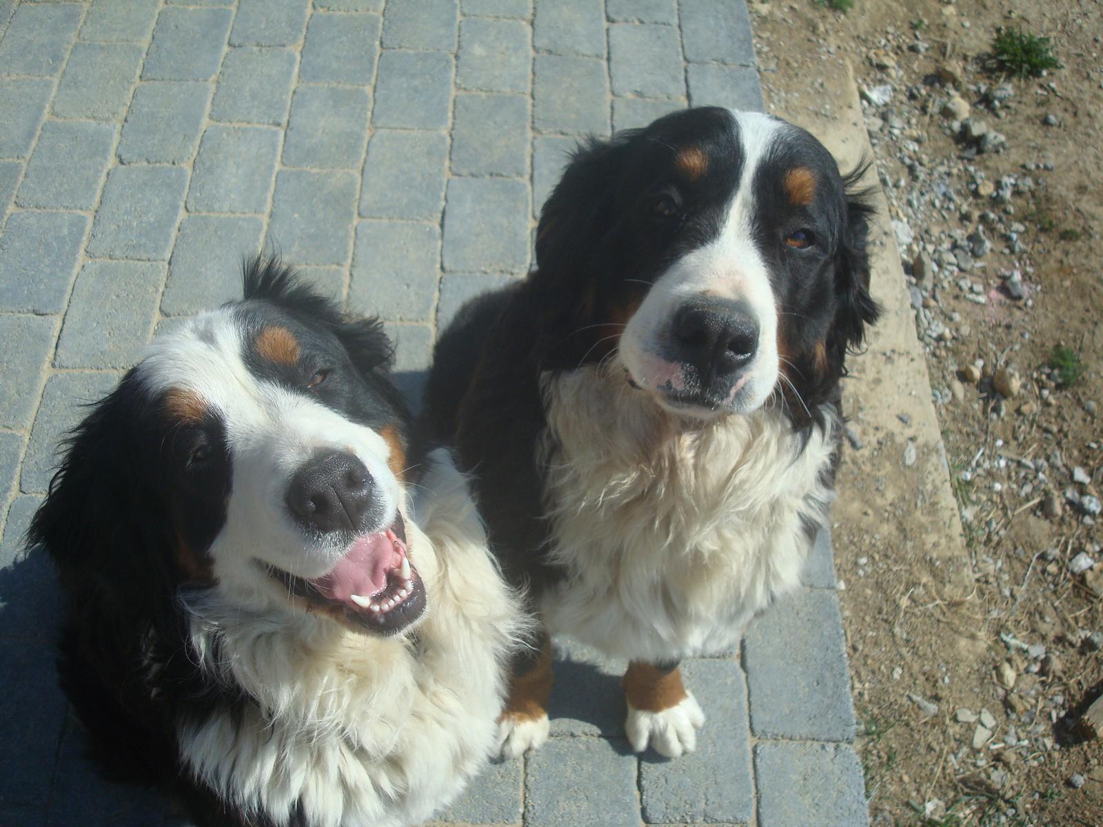 Nas zverinec - dve fenky,jeden pes a dvaja kocurikovia - Obrázok č. 34