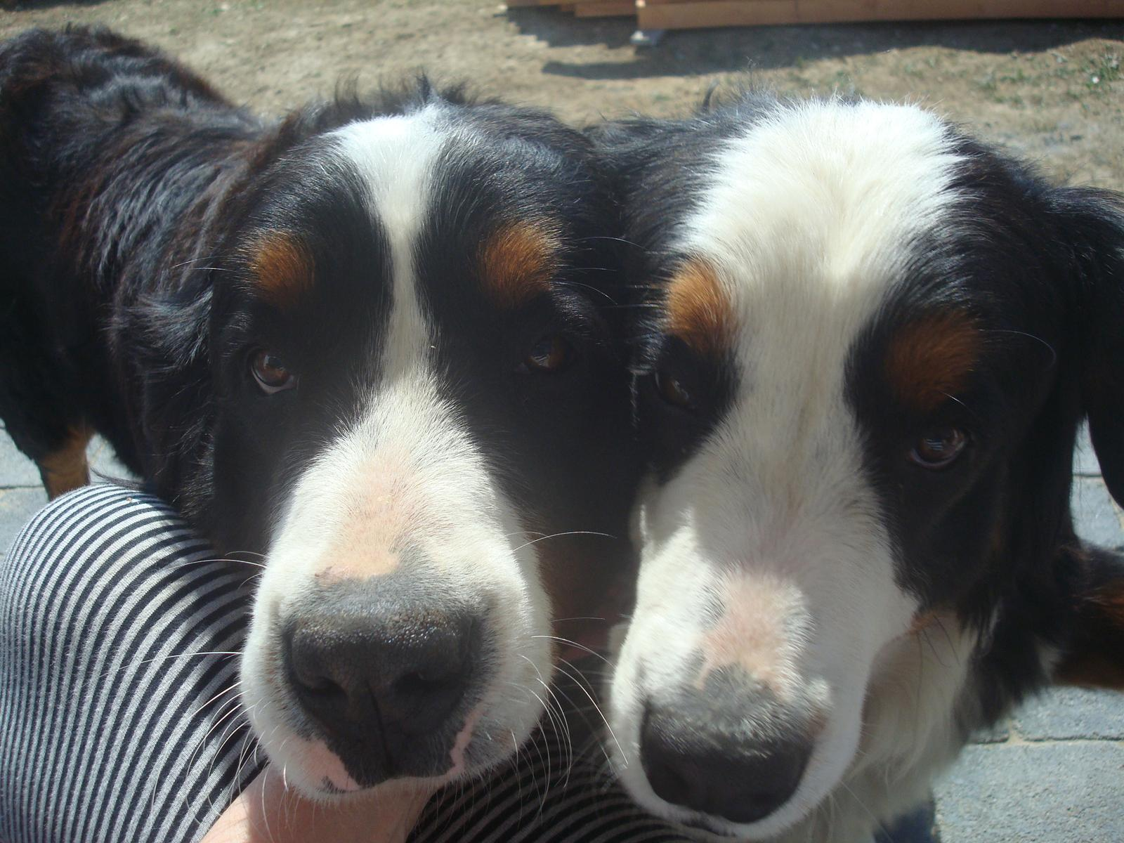 Nas zverinec - dve fenky,jeden pes a dvaja kocurikovia - Obrázok č. 35
