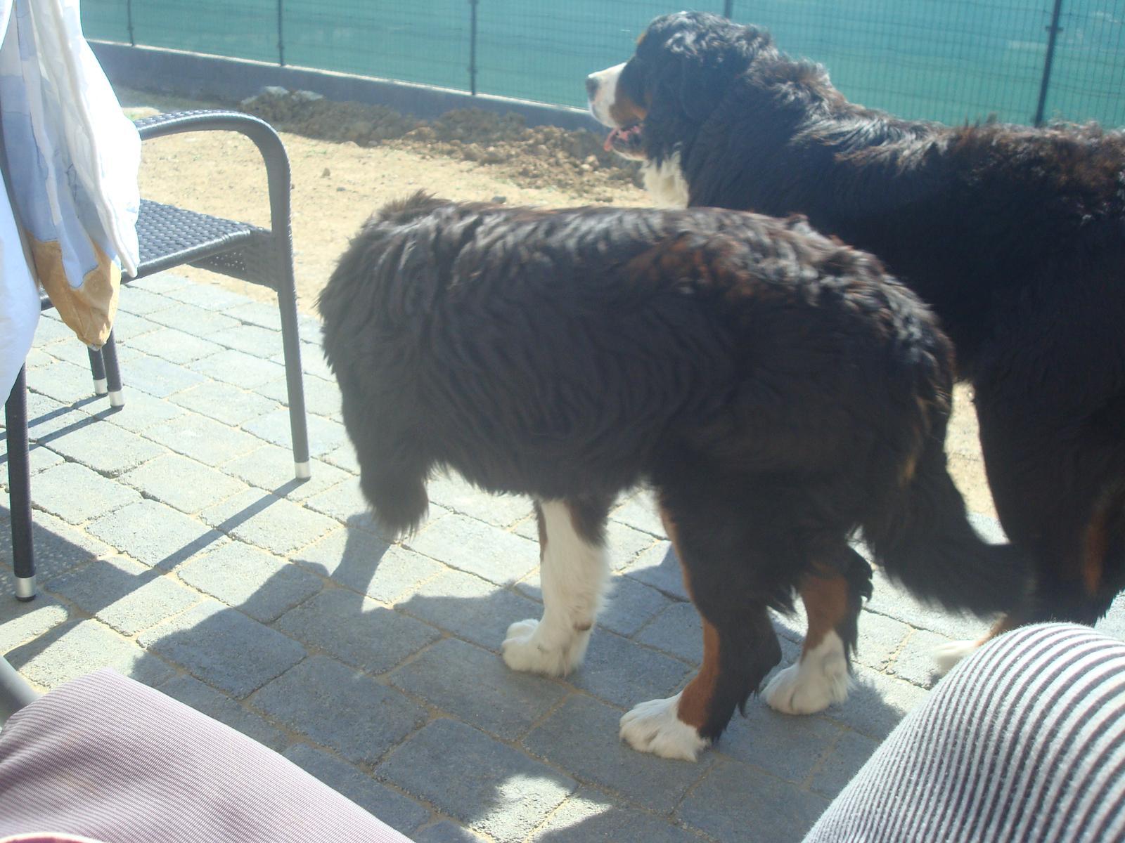 Nas zverinec - dve fenky,jeden pes a dvaja kocurikovia - Obrázok č. 38