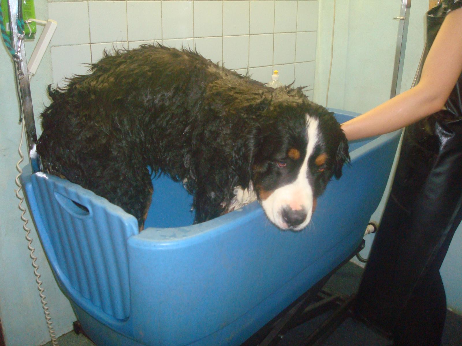 Nas zverinec - dve fenky,jeden pes a dvaja kocurikovia - dnes velke kupanie nasich krasok