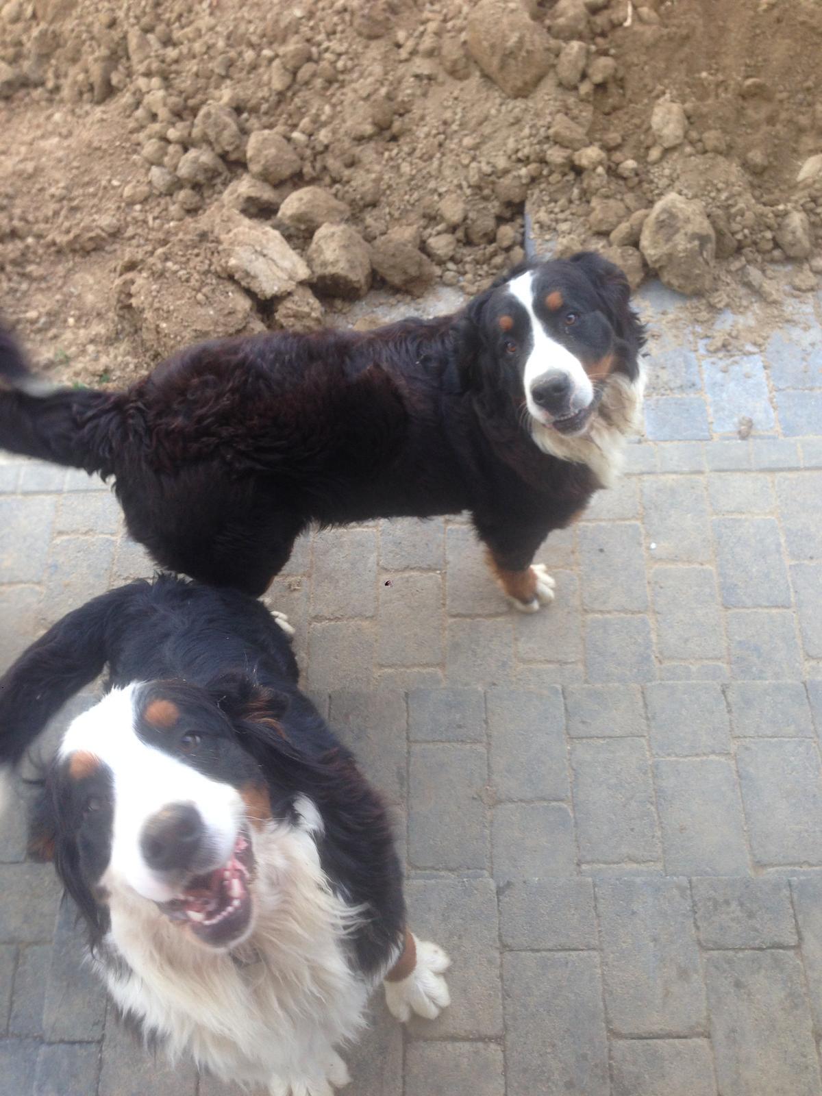 Nas zverinec - dve fenky,jeden pes a dvaja kocurikovia - Obrázok č. 47