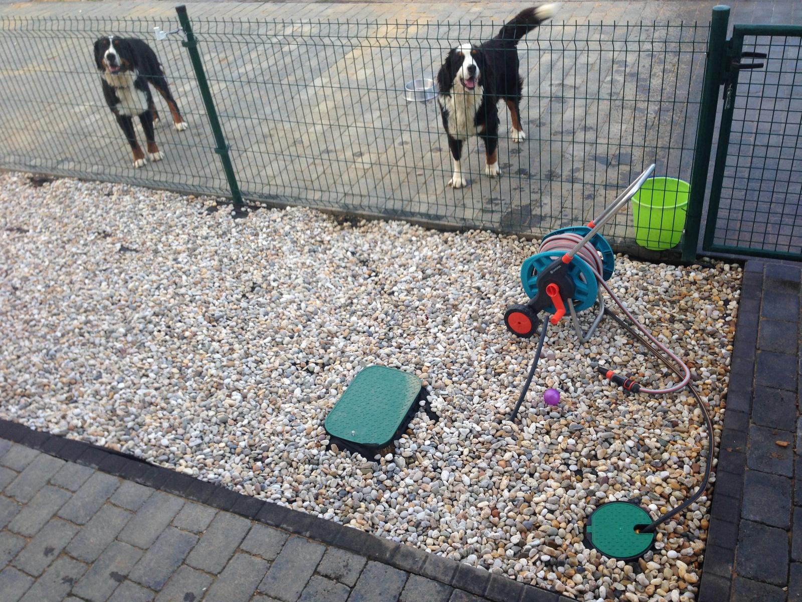 Nas zverinec - dve fenky,jeden pes a dvaja kocurikovia - Obrázok č. 49