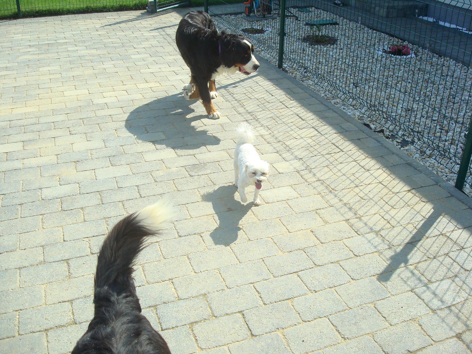 Nas zverinec - dve fenky,jeden pes a dvaja kocurikovia - Obrázok č. 50
