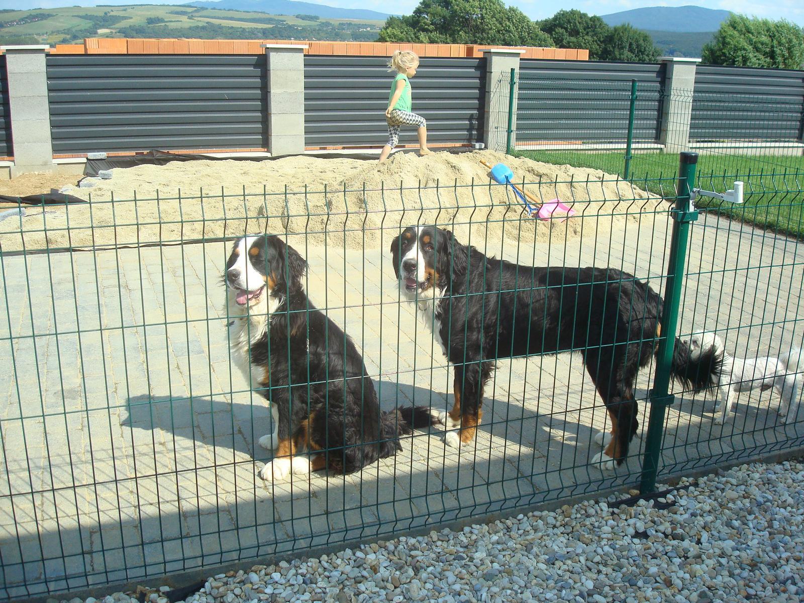 Nas zverinec - dve fenky,jeden pes a dvaja kocurikovia - Obrázok č. 51