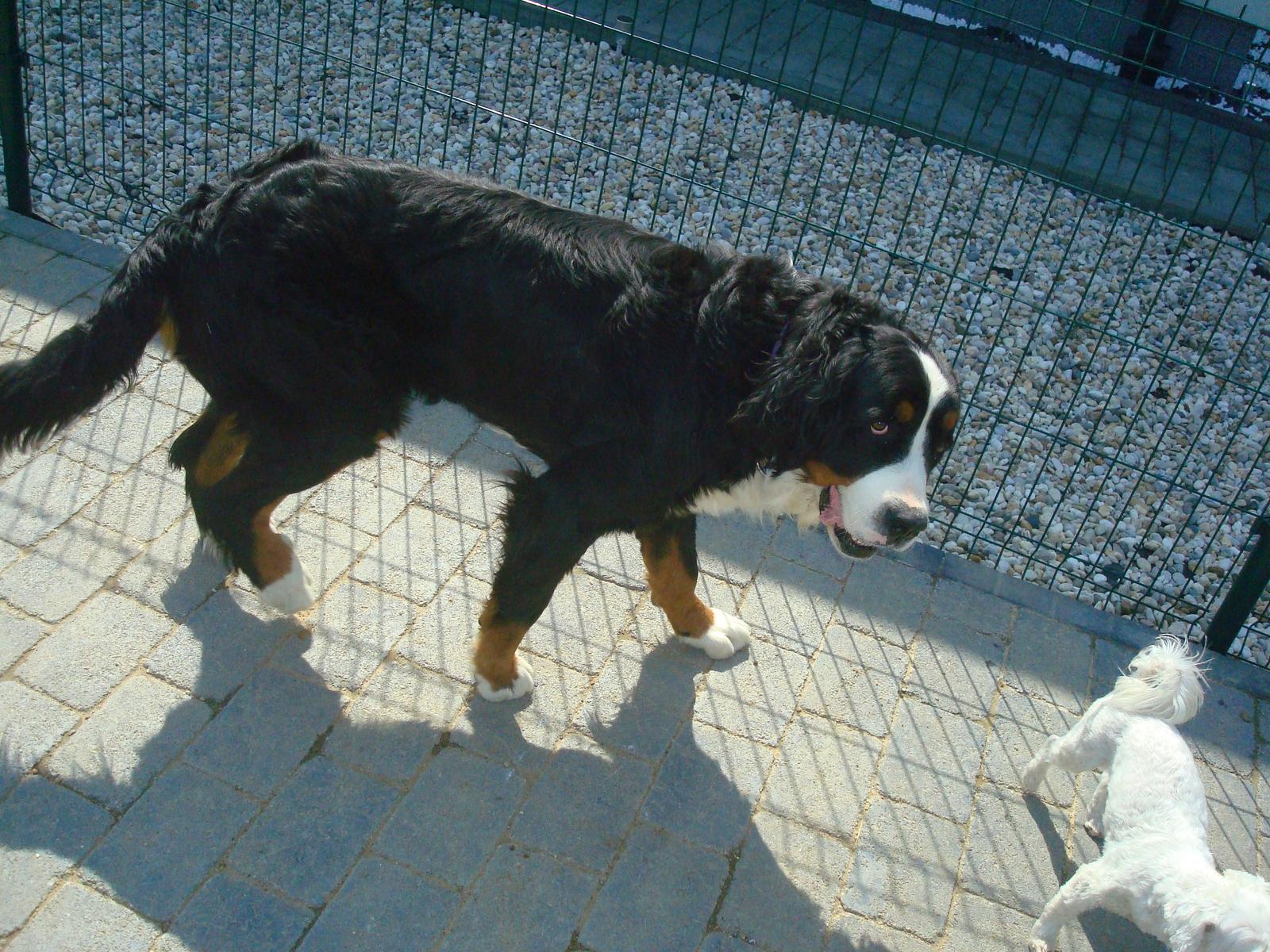 Nas zverinec - dve fenky,jeden pes a dvaja kocurikovia - Obrázok č. 52