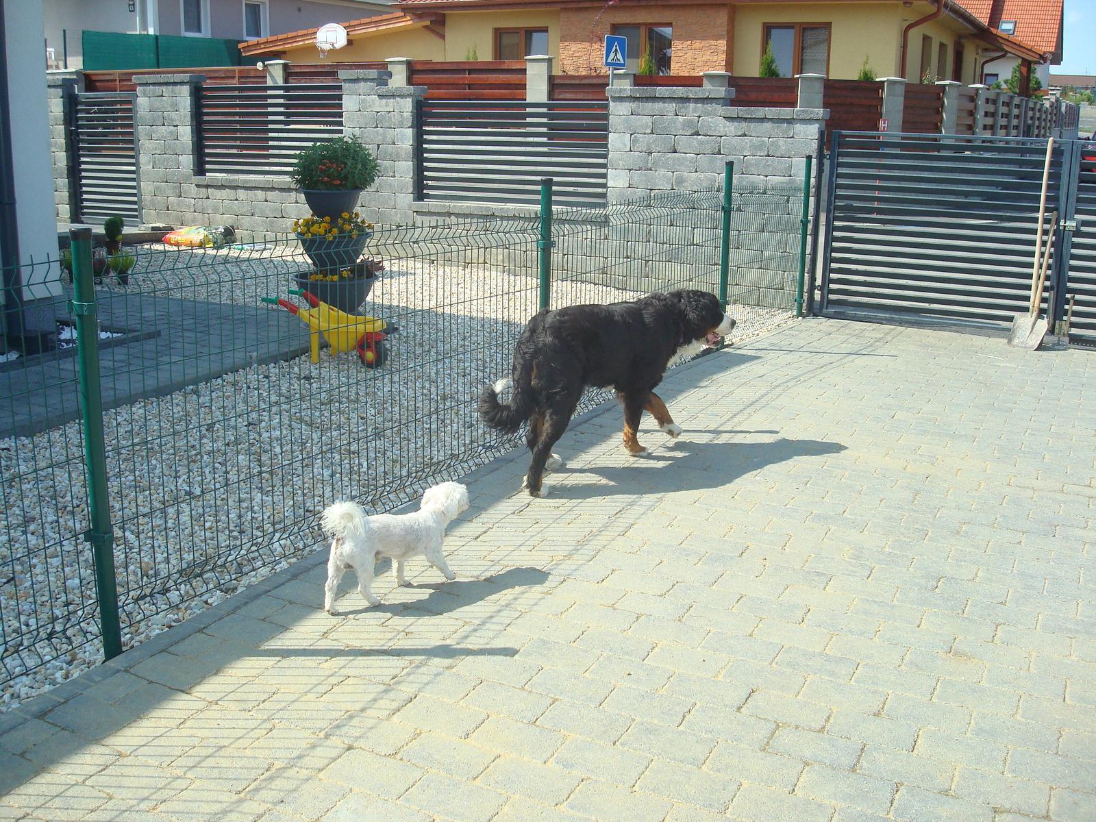 Nas zverinec - dve fenky,jeden pes a dvaja kocurikovia - Obrázok č. 53