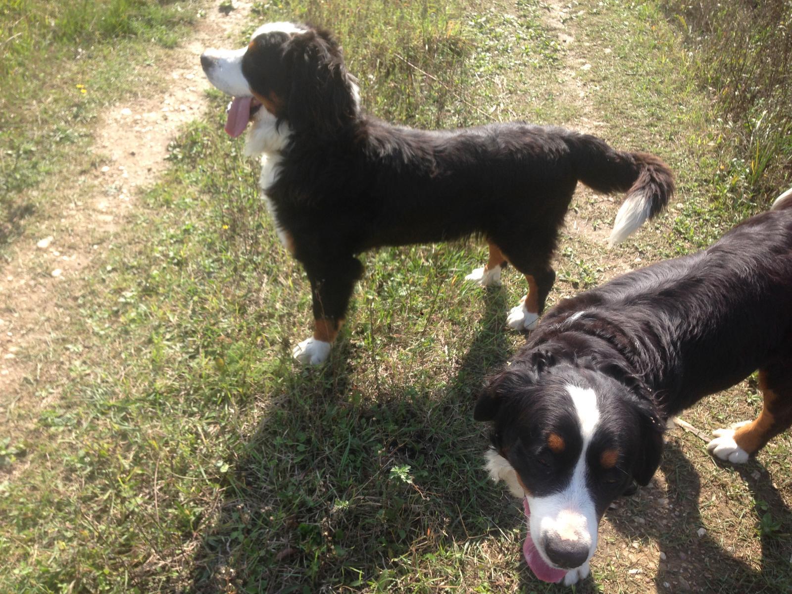 Nas zverinec - dve fenky,jeden pes a dvaja kocurikovia - Obrázok č. 55