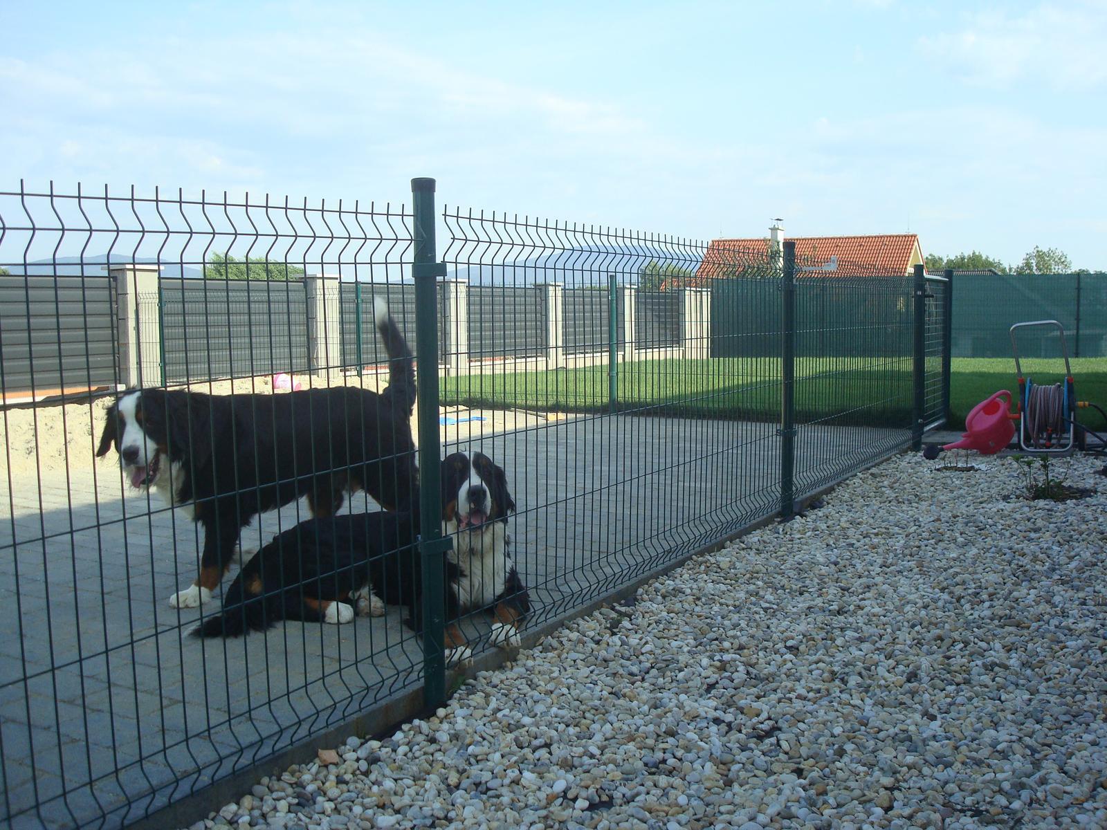 Nas zverinec - dve fenky,jeden pes a dvaja kocurikovia - Obrázok č. 59