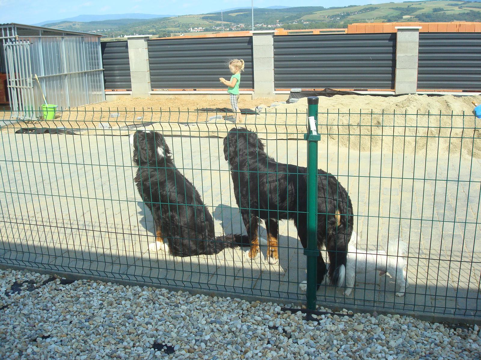 Nas zverinec - dve fenky,jeden pes a dvaja kocurikovia - Obrázok č. 60