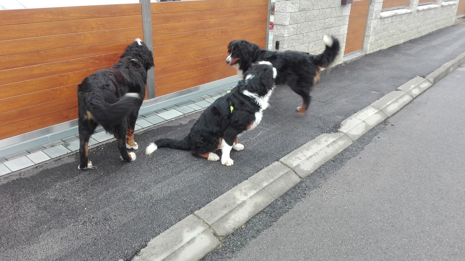 Nas zverinec - dve fenky,jeden pes a dvaja kocurikovia - Obrázok č. 66