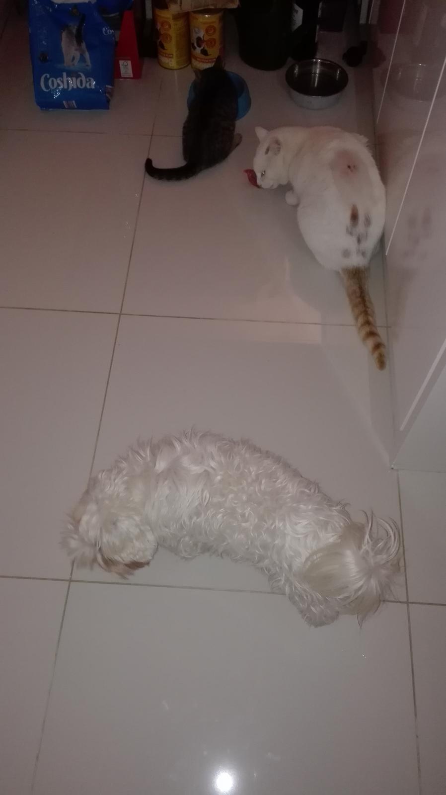 Nas zverinec - dve fenky,jeden pes a dvaja kocurikovia - Obrázok č. 68