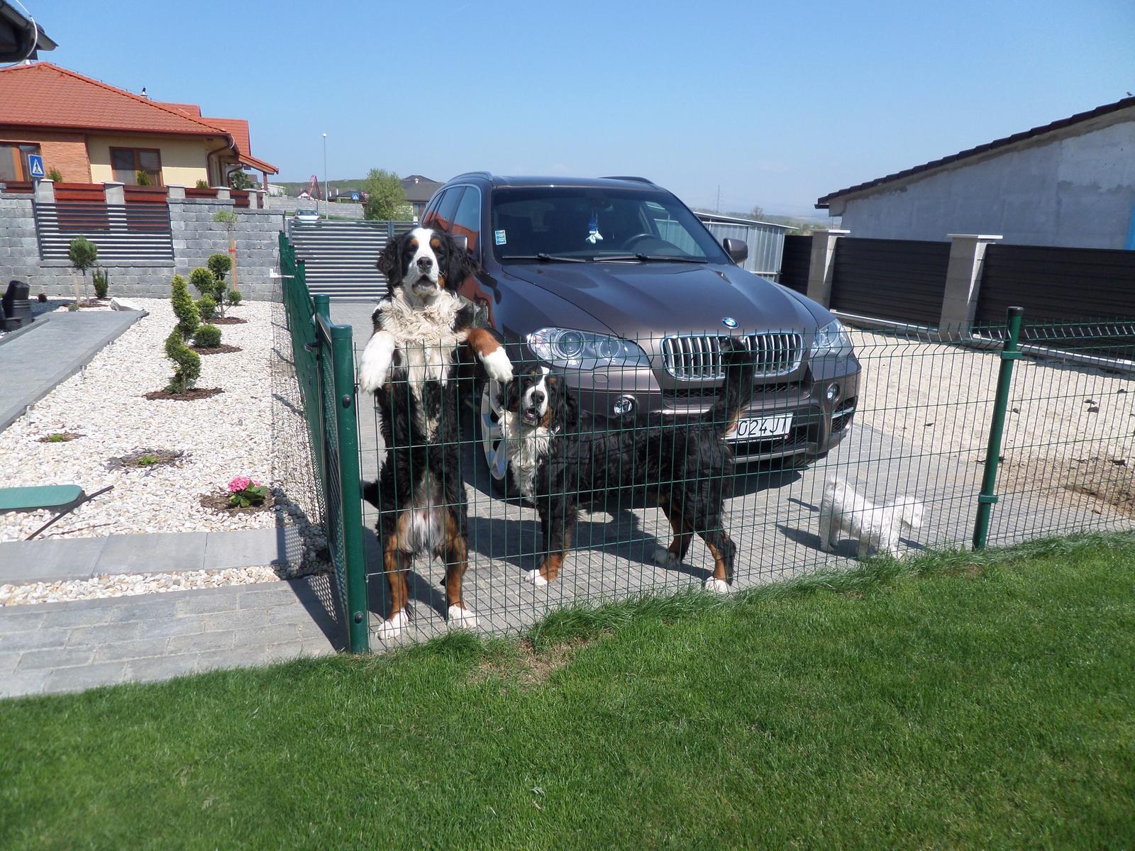 Nas zverinec - dve fenky,jeden pes a dvaja kocurikovia - Obrázok č. 72