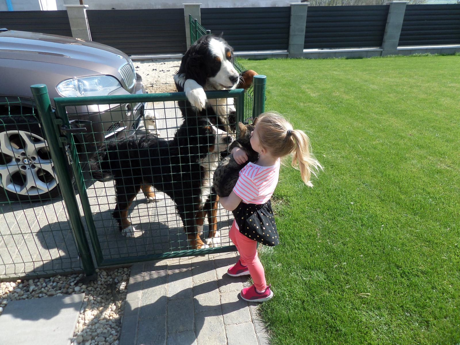 Nas zverinec - dve fenky,jeden pes a dvaja kocurikovia - Obrázok č. 73
