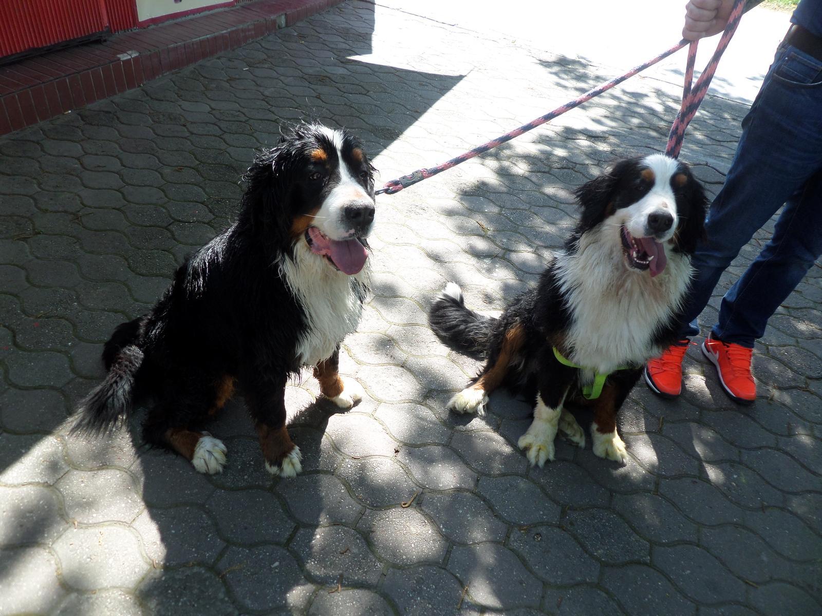 Nas zverinec - dve fenky,jeden pes a dvaja kocurikovia - Obrázok č. 75