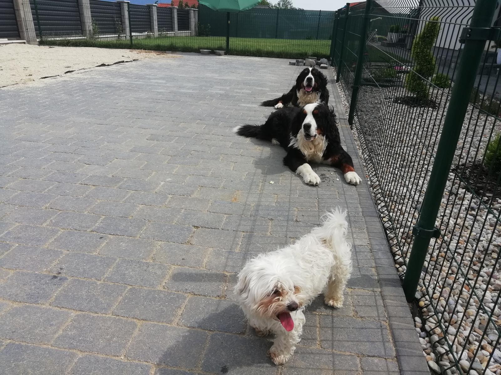 Nas zverinec - dve fenky,jeden pes a dvaja kocurikovia - Obrázok č. 85