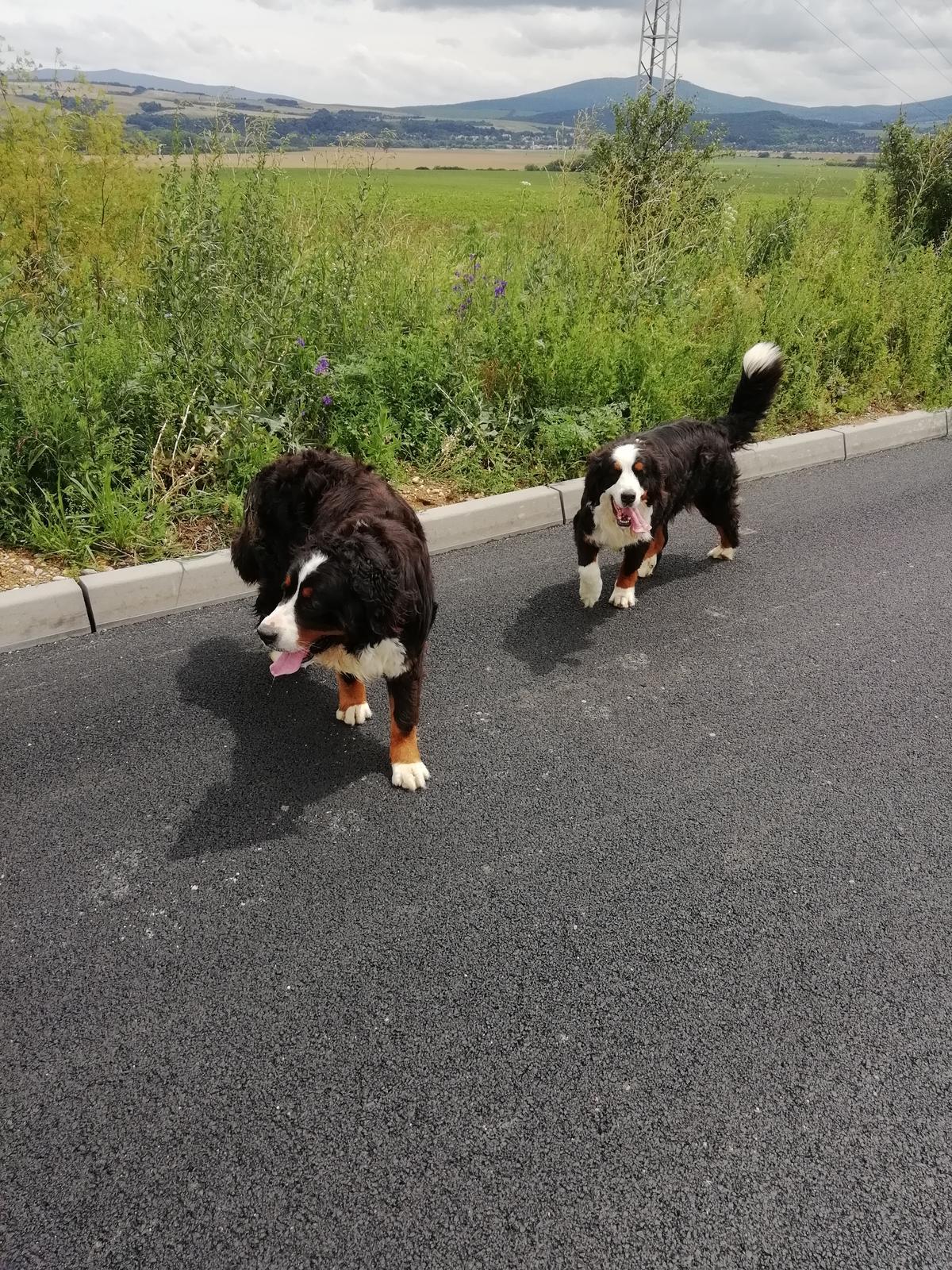 Nas zverinec - dve fenky,jeden pes a dvaja kocurikovia - Obrázok č. 87