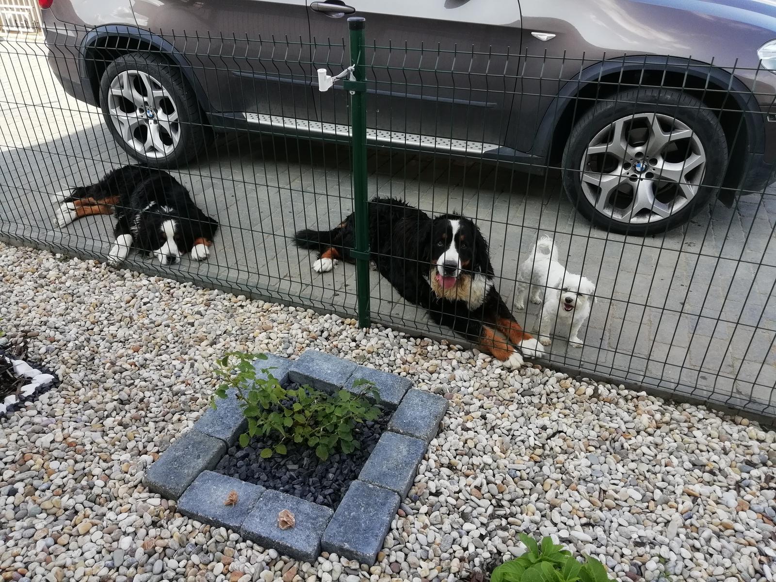 Nas zverinec - dve fenky,jeden pes a dvaja kocurikovia - Obrázok č. 89