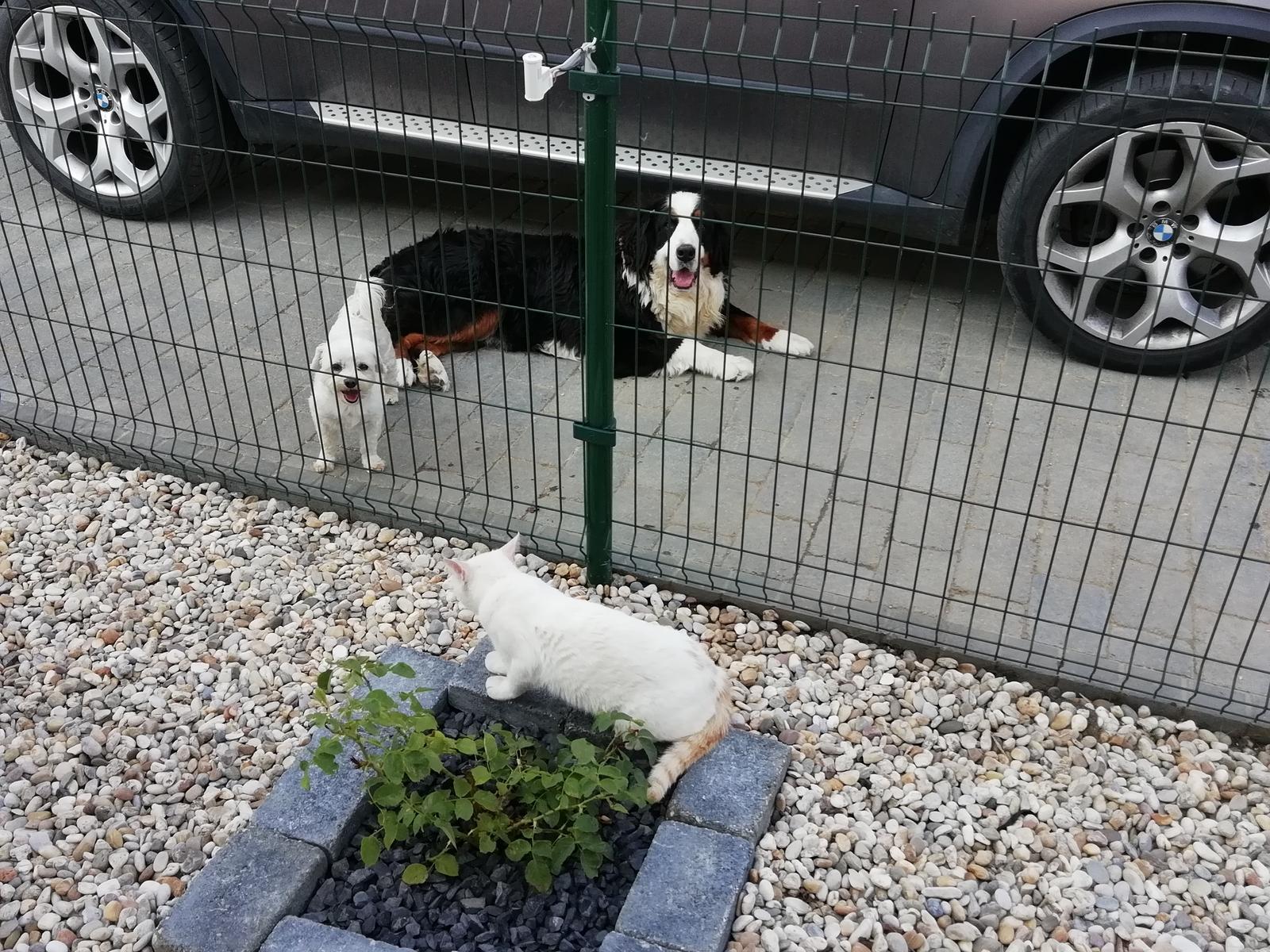 Nas zverinec - dve fenky,jeden pes a dvaja kocurikovia - Obrázok č. 90