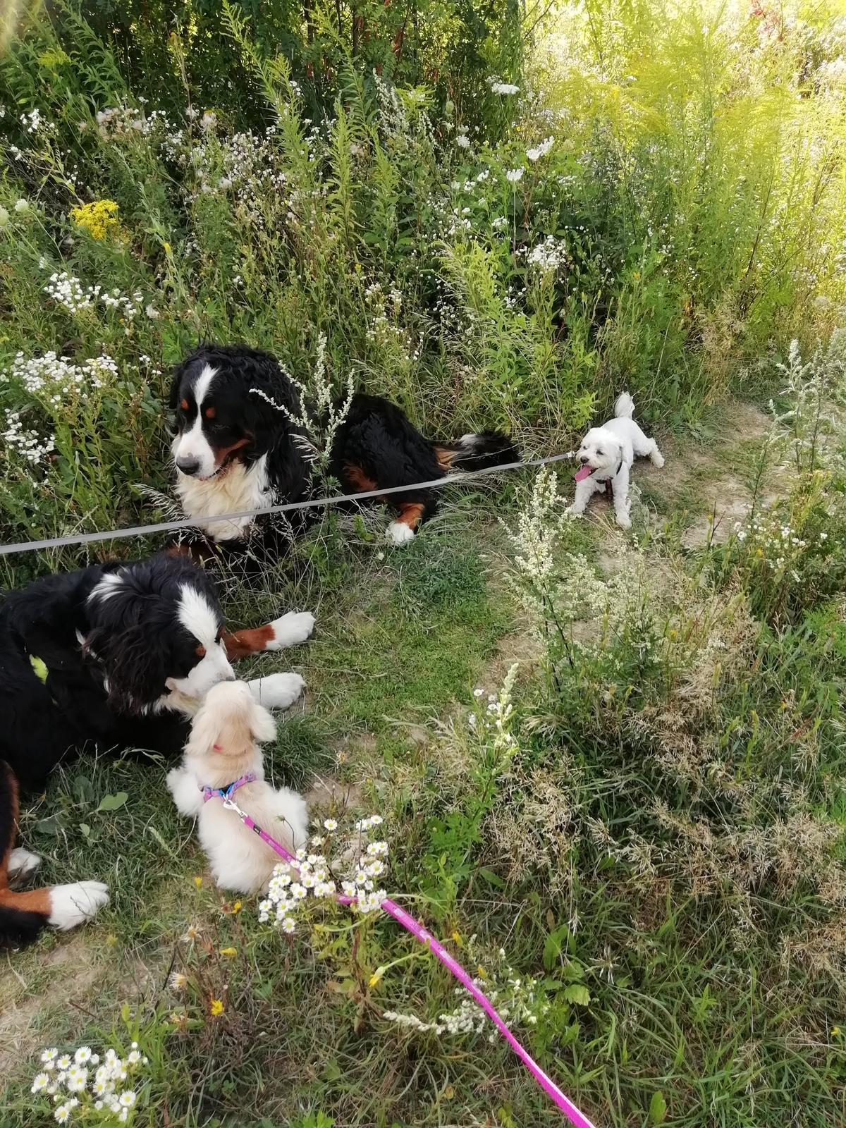 Nas zverinec - dve fenky,jeden pes a dvaja kocurikovia - Obrázok č. 91