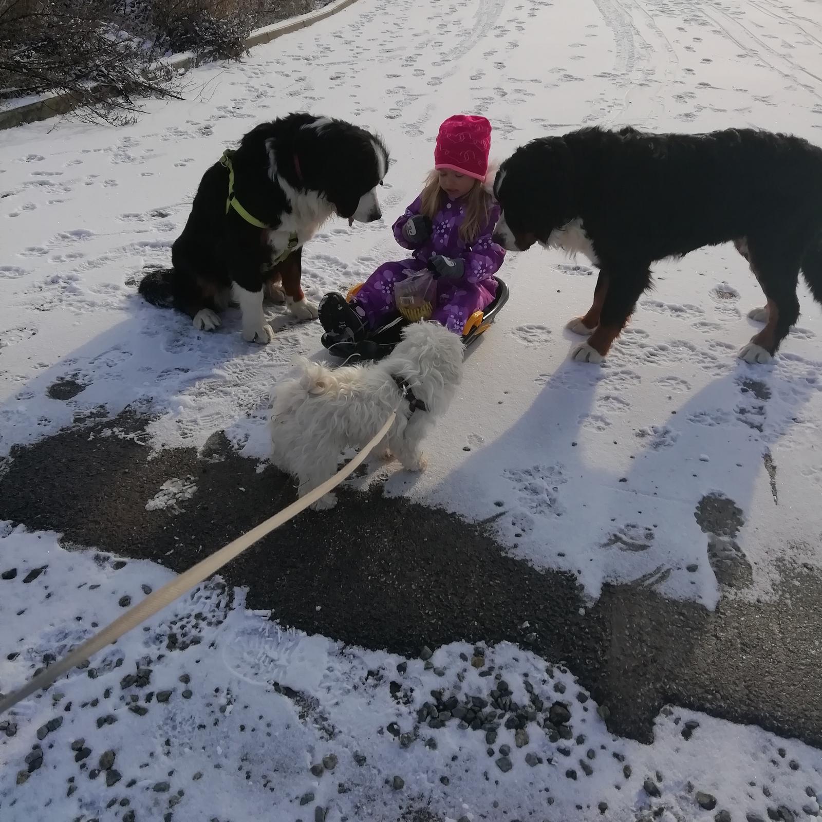 Nas zverinec - dve fenky,jeden pes a dvaja kocurikovia - Obrázok č. 96