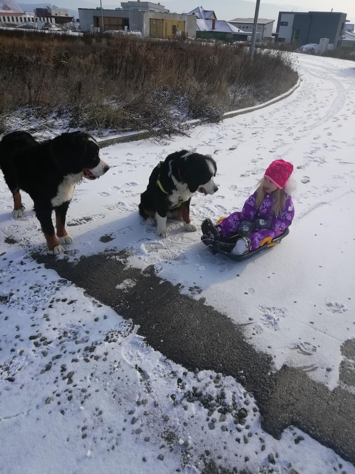 Nas zverinec - dve fenky,jeden pes a dvaja kocurikovia - Obrázok č. 97