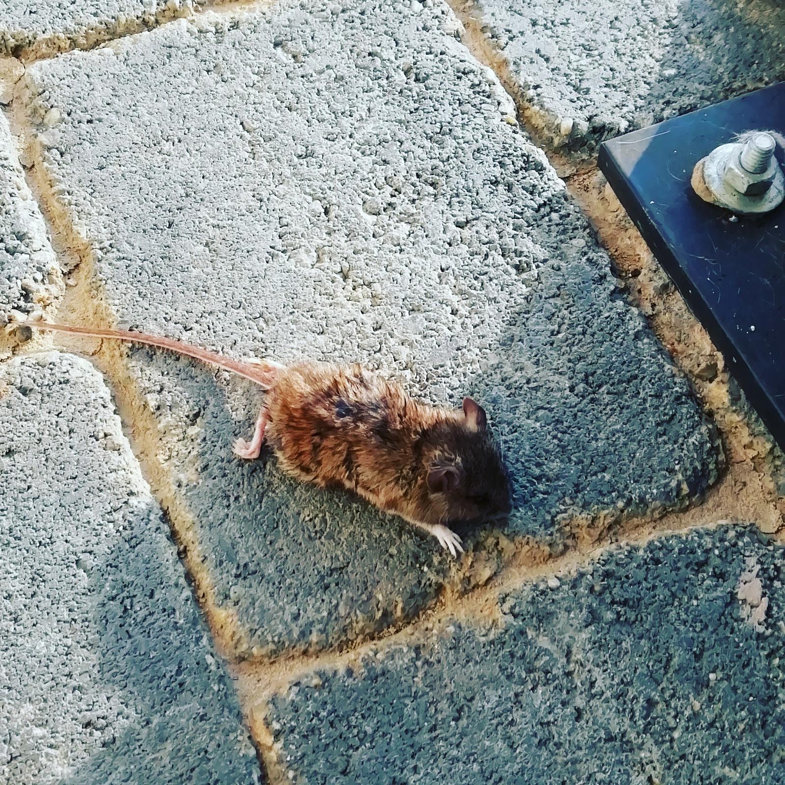 Záhradka 2019/20 bývame 4 a 5 rok :-) - Dnes doniesli kocúrikovia prvú myš takže jar naozaj začína ☀️🐈🌲🌿🍀