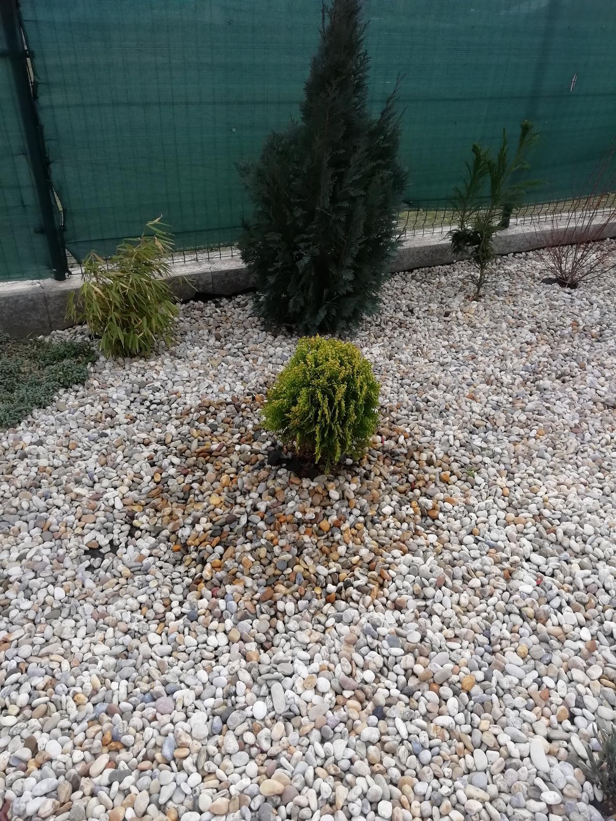 Záhradka 2019/20 bývame 4 a 5 rok :-) - dnes sadena 15.3.