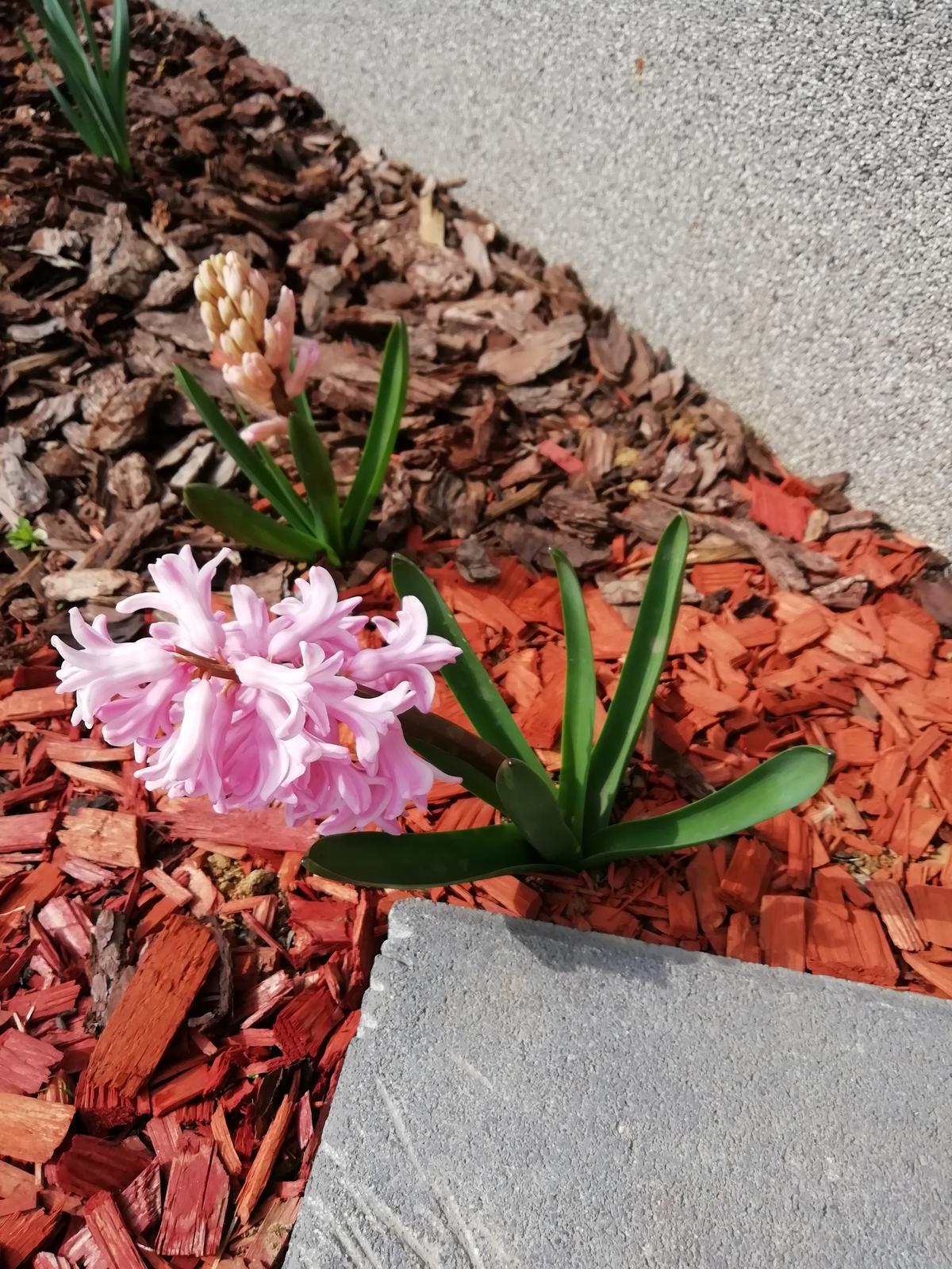 Záhradka 2019/20 bývame 4 a 5 rok :-) - Obrázok č. 45