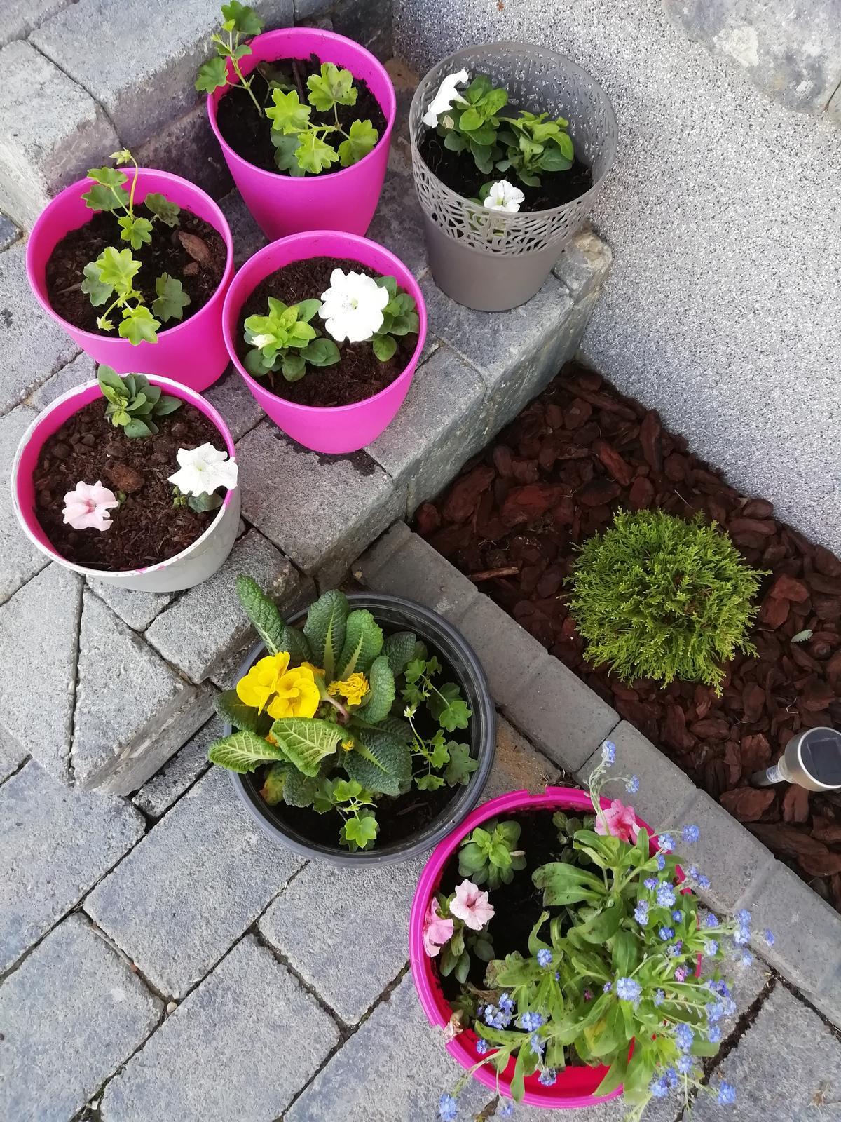 Záhradka 2019/20 bývame 4 a 5 rok :-) - Kvietky posadene