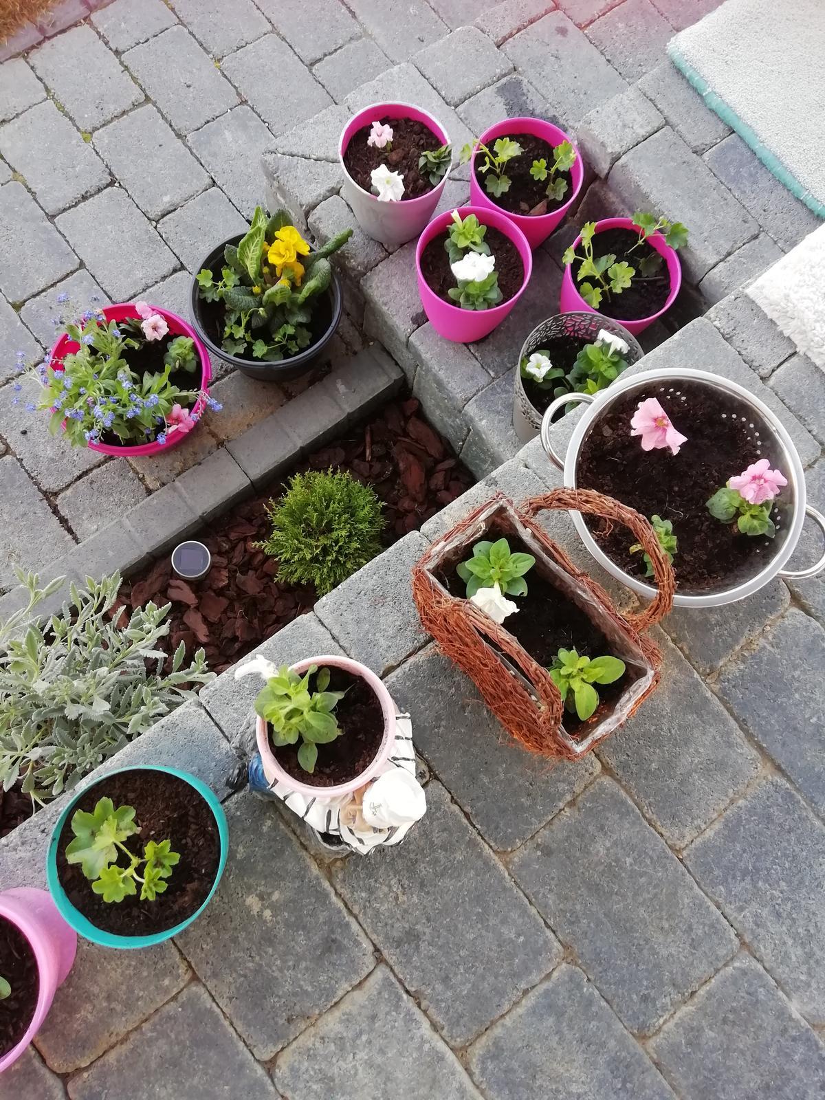 Záhradka 2019/20 bývame 4 a 5 rok :-) - Obrázok č. 56