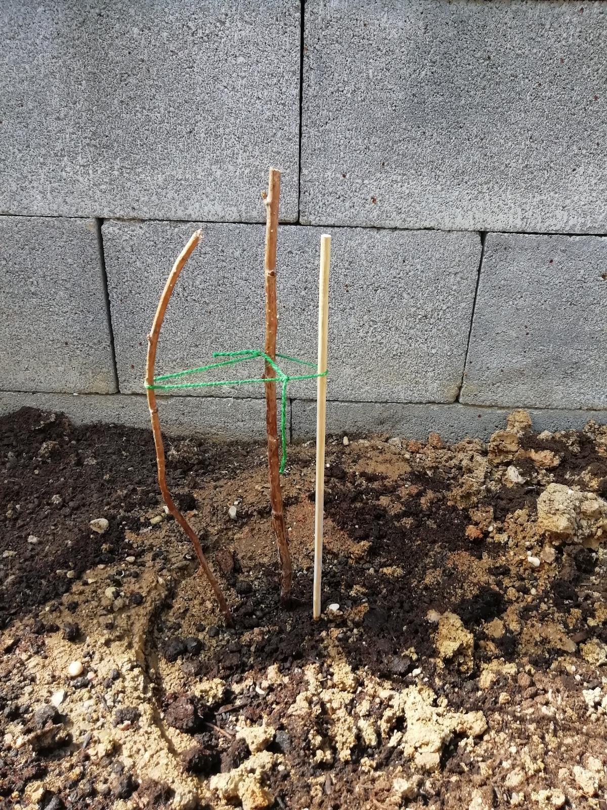 Záhradka 2019/20 bývame 4 a 5 rok :-) - Malinu som sadila 1.4.