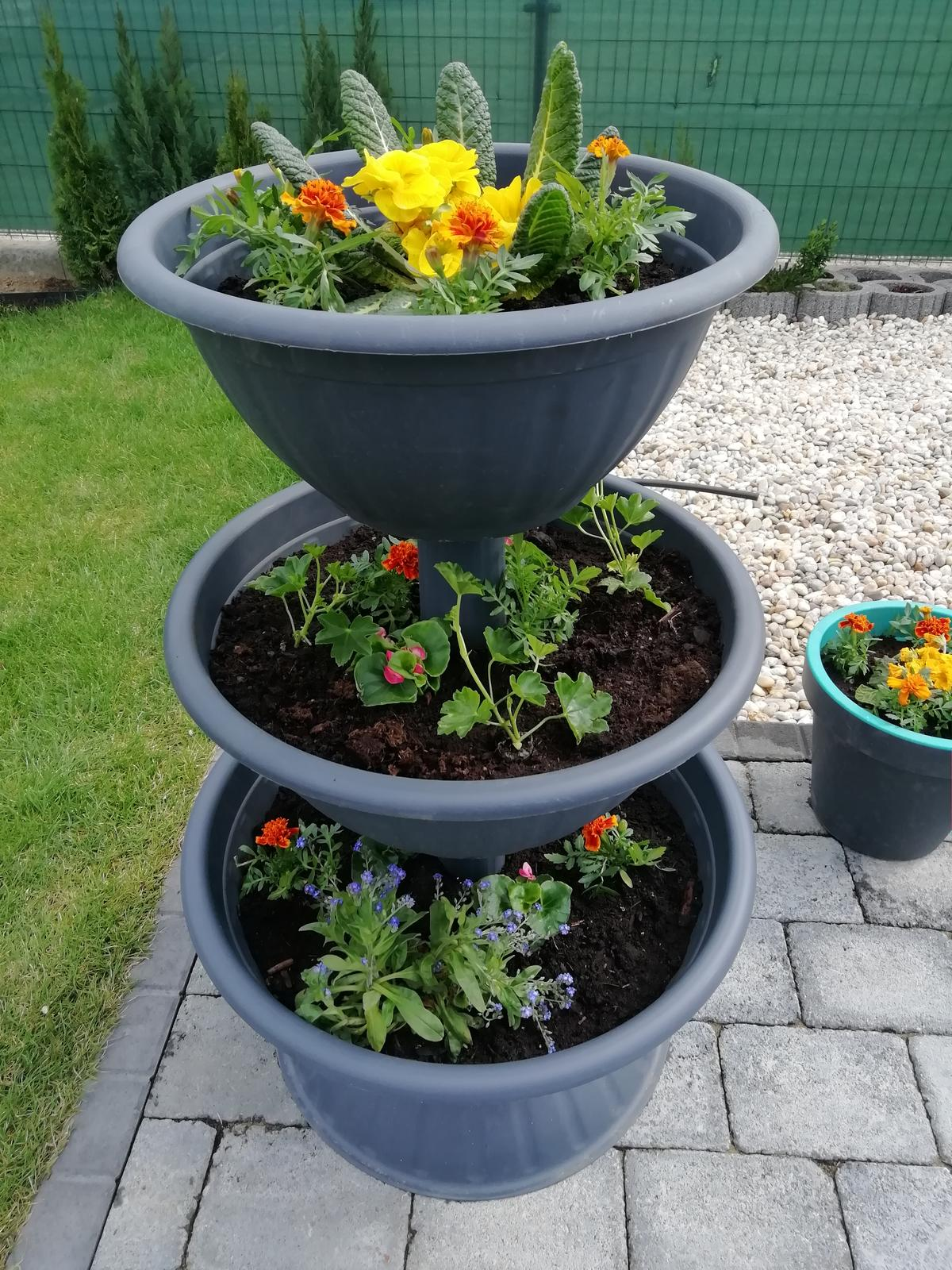 Záhradka 2019/20 bývame 4 a 5 rok :-) - Kvietky posadene 9.4.