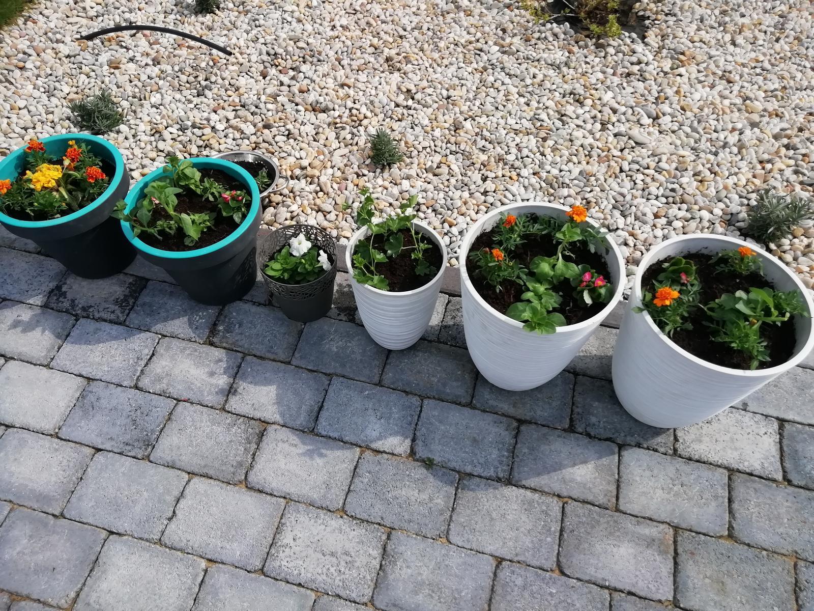 Záhradka 2019/20 bývame 4 a 5 rok :-) - Obrázok č. 96