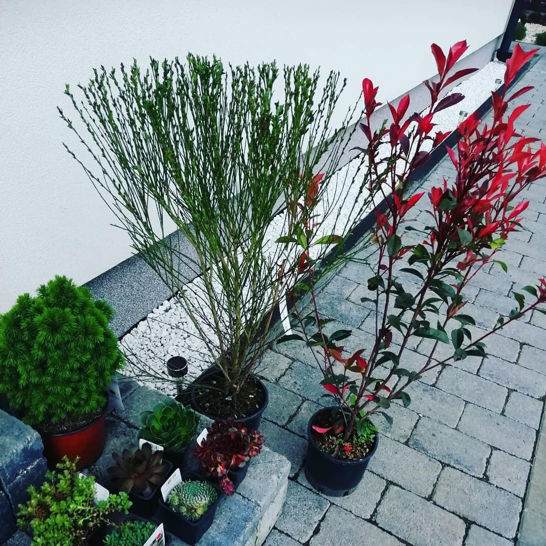 Záhradka 2019/20 bývame 4 a 5 rok :-) - Obrázok č. 156