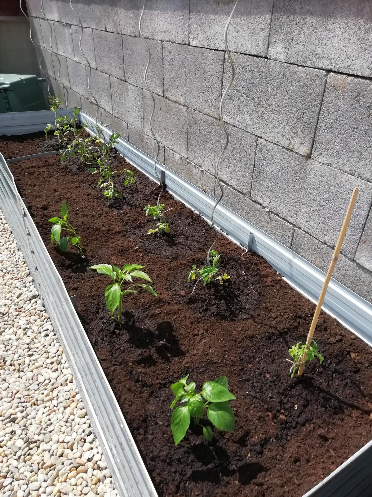 Záhradka 2019/20 bývame 4 a 5 rok :-) - paradajky 6x,cervena paprika 3x...zatial