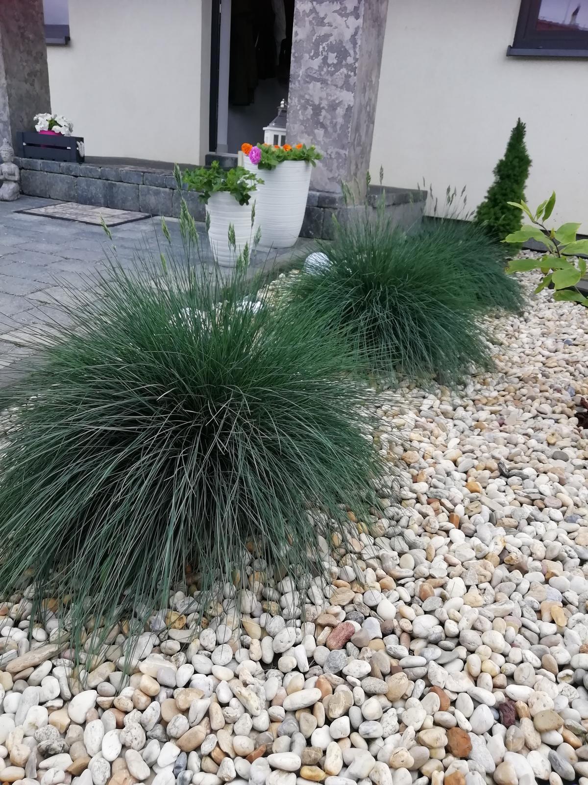 Záhradka 2019/20 bývame 4 a 5 rok :-) - Moje obľúbené kostravy