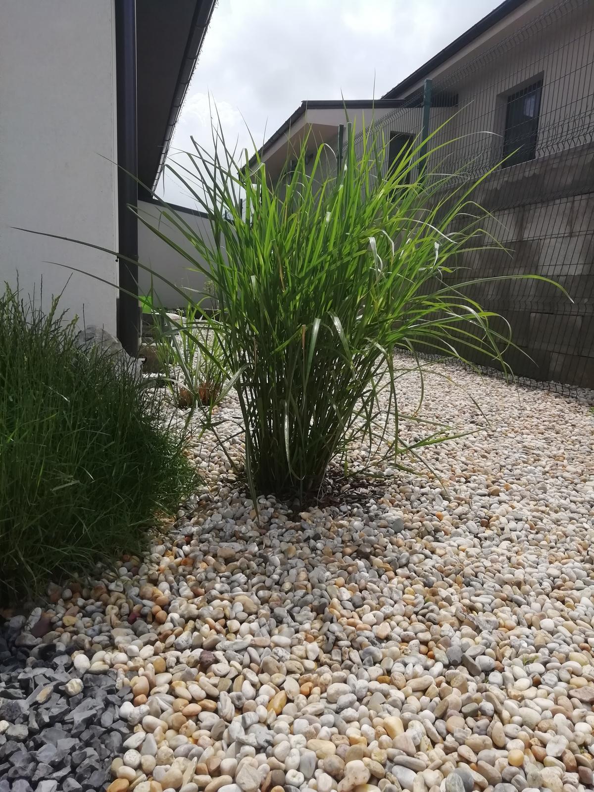 Záhradka 2019/20 bývame 4 a 5 rok :-) - Tráva miscantus nádherná