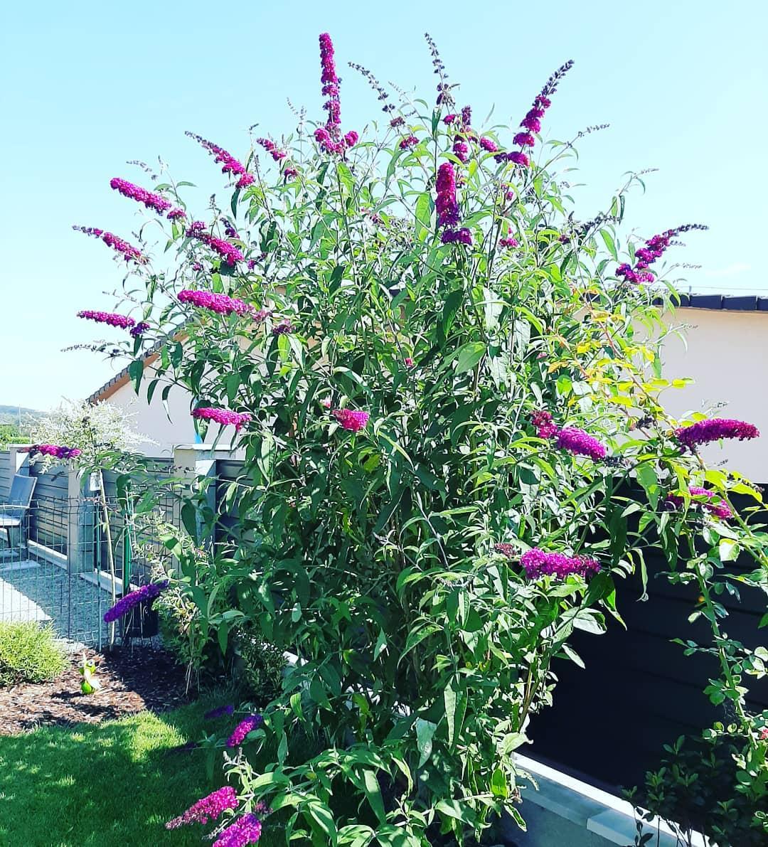 Záhradka 2019/20 bývame 4 a 5 rok :-) - Obrázok č. 491