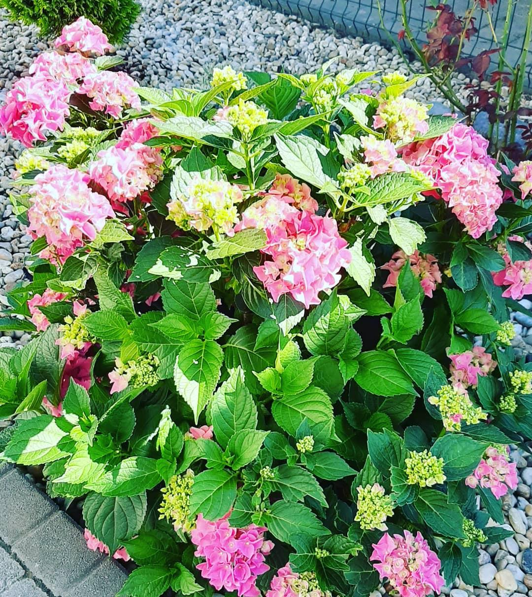 Záhradka 2019/20 bývame 4 a 5 rok :-) - Obrázok č. 493